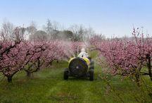 Pesticides - Droit des victimes