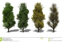 Növény_4 évszak