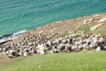 ★ Falkland Islands ★