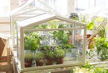 Plantes et terrarium.