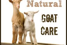 GOATS! / All things Goats!