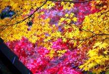 Autumnal Leaves / by Kotaro K.
