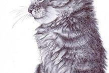 dessin chat / dessin de chat