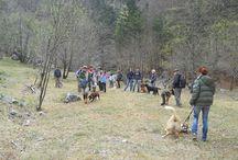 Dog Walking a Pian dei Ciclamini - domenica 13 aprile 2014