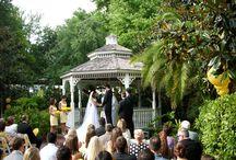 Courtyard at Lake Lucerne Weddings / Orlando Harpist - Weddings at the Courtyard at Lake Lucerne in downtown Orlando, Florida. #courtyard #lake #Lucerne #Orlando #wedding #harpist