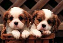 Puppies!!!  / by Vicki Gagliardi