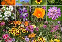 Amazon.com : Package of 3, 000 Seeds, Low Growing Wildflower Mixture (