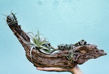 Plant Nursary
