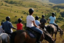 Horse Riding / No matter if you are a confident rider or a slightly nervous beginner, the open spaces in the Drakensberg, and KwaZulu-Natal Midlands provide the opportunity to explore, take in the scenery and enjoy the freedom of riding.