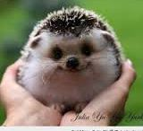 I need a hedgehog! / by Karen Zinn
