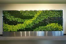 Living Walls & Planter Portraits / Examples of biophilic design, and the use of plants as interior design pieces