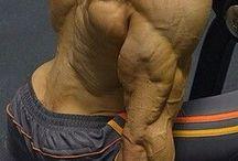 Anatomía y poses