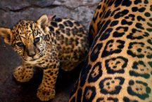 lovely leopard<3 / by Marcy Gauna