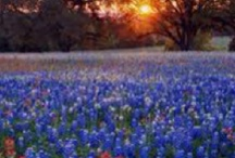 TEXAS / by Laura Taylor