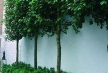 Lime Garden Ideas