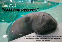 "Snooty's ""Call for Recipes"" / In honor of The Ripple Effect Fundraiser, we are inviting fans to participate in our first ever: Snooty's ""Call for Recipes."" Snooty eats about 70lbs of healthy food per day including romaine lettuce, kale, sweet potatoes broccoli, cabbage, and carrots. Now you can join Snooty in his healthy vegan lifestyle and submit a photo (with cooking directions) of your favorite KALE, SWEET POTATO, or CABBAGE recipe on our FB or Twitter for a chance to win a special Snooty Gift Basket!  / by South Florida Museum"