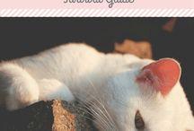 For Crazy Cat Mums