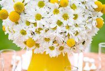 Daisies / by Kim Dickinson