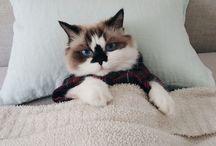 pudda cats