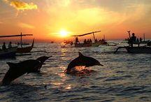 Lovina Indonesië Bali