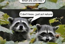 !!!!funny stuff