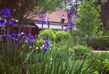 suomalaiset puutarhat