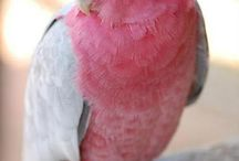 Ptasie
