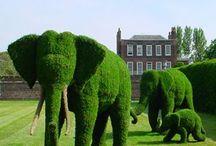 Garden / by Diana Liptrott