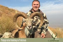 Punjab urial hunting in Pakistan
