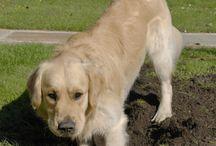 Kutya tanitása