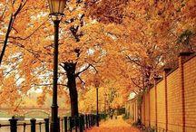 Autumn in... / all about autumn season!