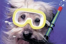 Underwater Dogs / by Omar Kattan