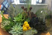 sueperb succulents