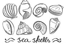 Shells / muszle, muszelki