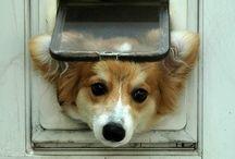 pies w drzwiach