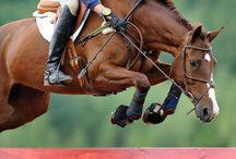 Horses / null