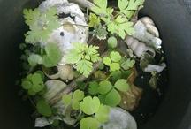 veertjes, schelpen, stenen , zaadjes , potjes ,plantjes .knoopjes & stekjes & stekeltjes
