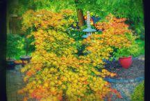 Ogród z elementami w stylu japońskim / inspiracje i fascynacja ogrodami japońskimi jako sztuka.