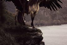 fantastic Pegasus