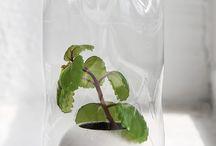 Inredning - växter inspo