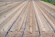 California / Farming in California. See how fruits and Vegetables are grown. And how produce fields receive water