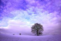Violet & Purple / Nice just nice