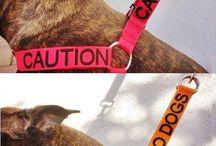 Animals accessories
