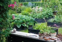 Gardens / by Christa Nelson