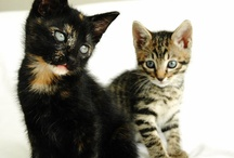 Kittens / Kittens and kittens, and more kittens! Need a dose of cute kitten photos? We have them here!