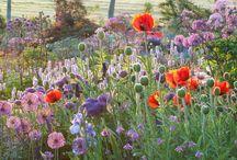 Flower garden  お花畑