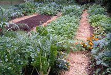 zöldségkert