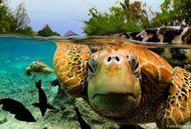 Bora Bora Photos