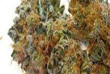 Cannabis Photos / Cannabis Photos