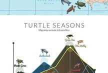 Wildlife and Animal Travel